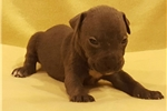 Picture of Male pup A