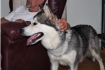 Picture of Nala is being sold with full breeding rights