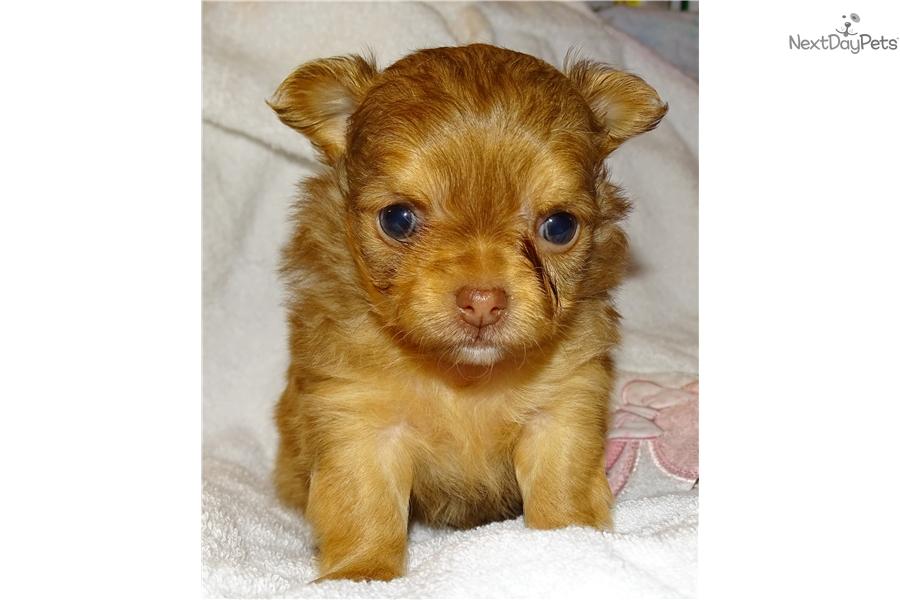 Salina Kansas Dogs For Sale
