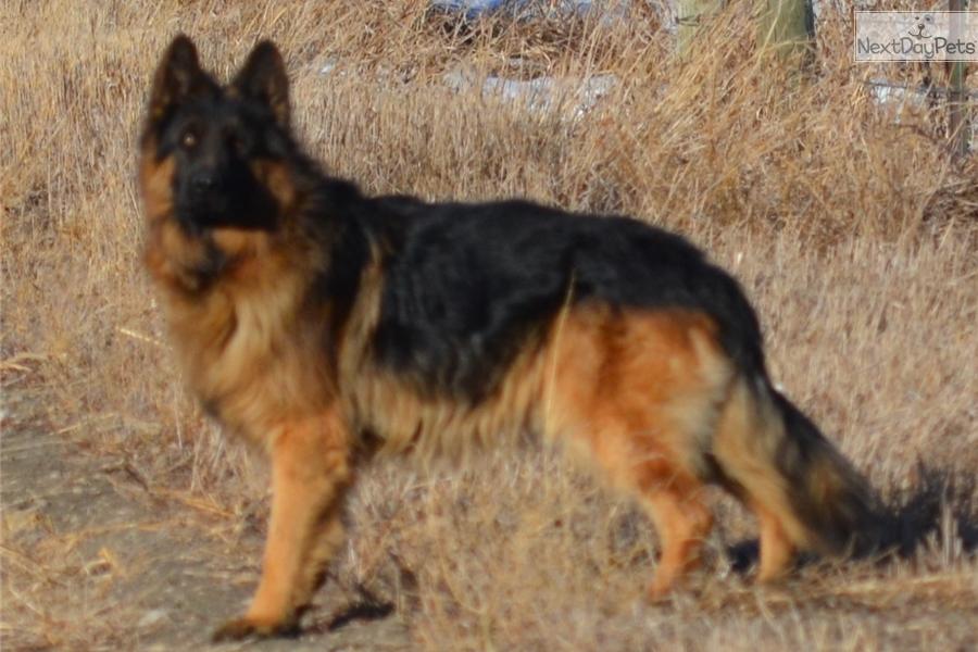 Dog Training Pierre Sd