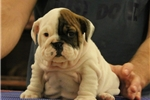 Picture of Becky - www.suburbanbullies.com
