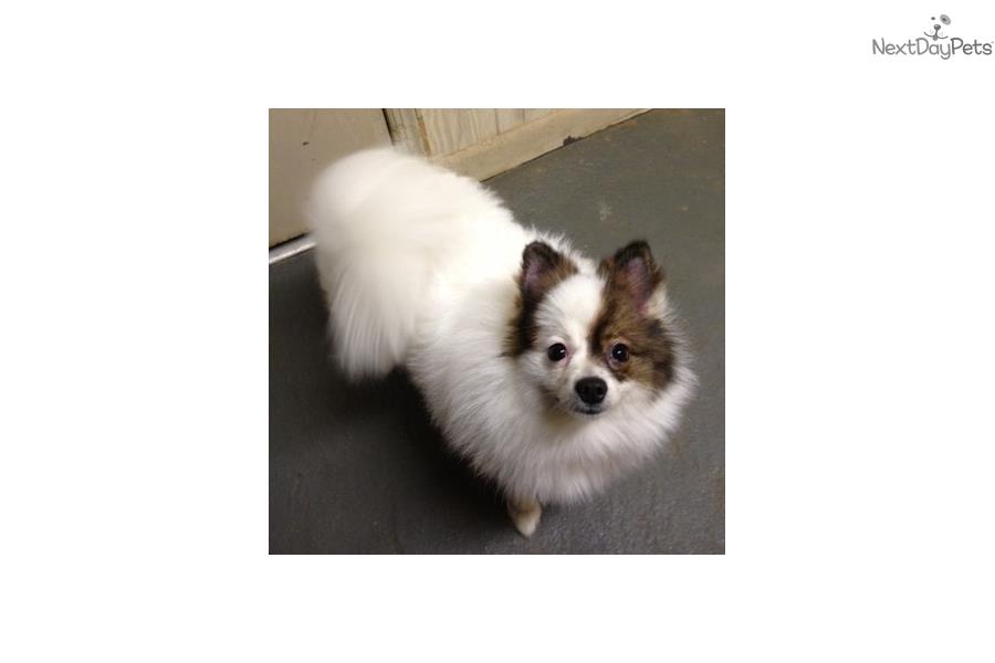 Small Dogs For Sale In East Texas