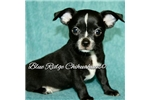 Picture of AKC Black/White Male