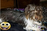 Picture of Zina Rose Pet only