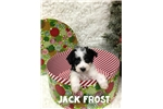 Picture of Jack Frost