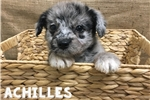 Picture of Achillies