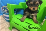 Picture of Thomas