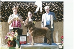 Picture of AKC Ch. Bloodloodline Chesapeake Bay Retriever
