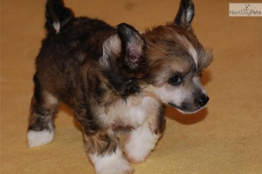 Cute-Labrador-Retriever-Puppy-Sleeping-575x431[1].jpg