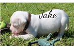Picture of Jake