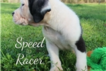 Picture of Speed Racer