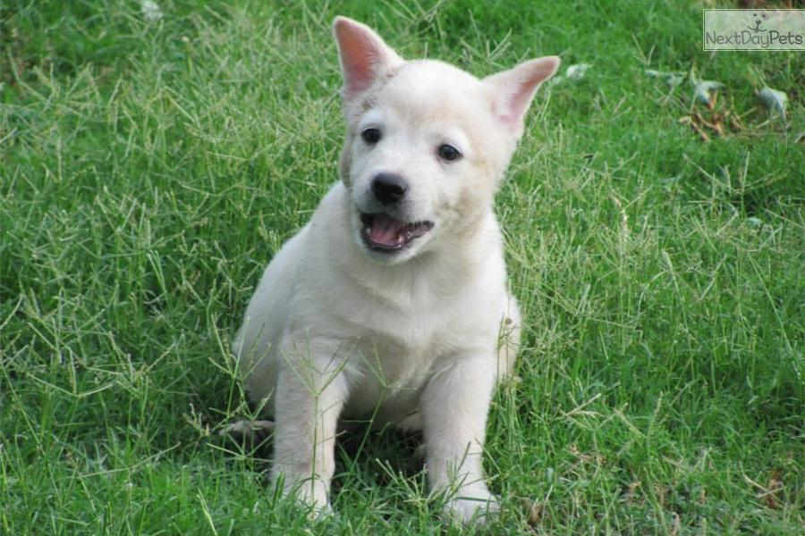Texas Heeler Dog Breed Dog Breeds Pet Image Gallery Alo2nqao92 ...