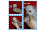 Picture of Igloo *TOY*