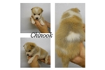 Picture of Chinook