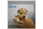 Picture of Aurora