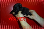Picture of Hooper