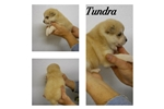 Picture of Tundra