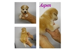 Picture of Aspen