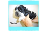 Picture of Checkers