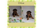 Picture of Chloe