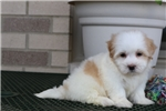 Picture of Layla