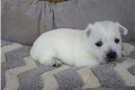 Picture of Wilma