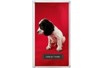 Picture of ENGLISH COCKER SPANIEL HEALTH TESTED PARENTS