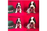 Picture of CH, bloodlines-health tested