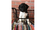 Picture of Bandit