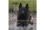 Picture of Nero Jr.