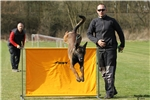 Picture of ELITE MALINOIS