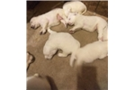 Picture of Polly's pups