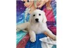 Picture of Elsa