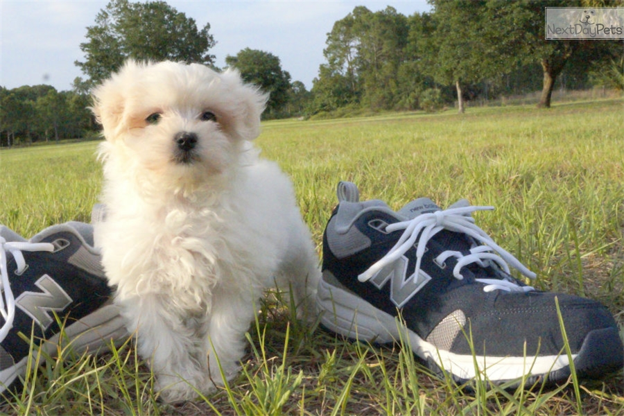Free Dog Adoption Sarasota