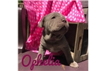 Picture of Ophelia