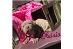 Picture of Oleisia