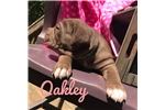 Picture of Oakley