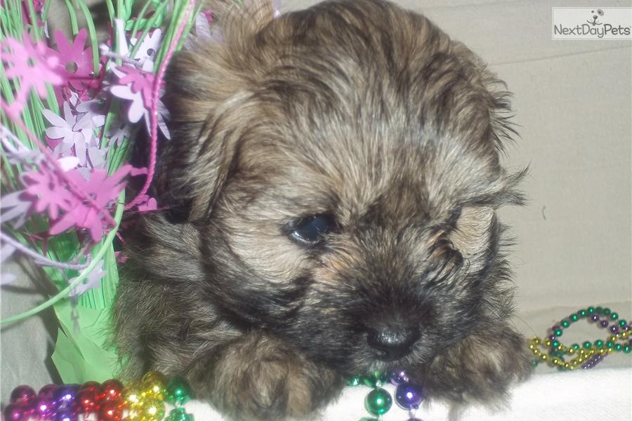 Dogs For Sale In Southwest Michigan