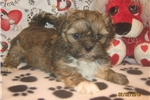 Picture of AKC Trudy