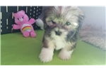 Picture of AKC Mindy