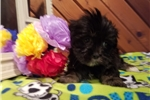 Picture of AKC Maggie