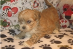 Picture of AKC Toby