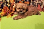 Picture of AKC Raney