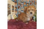 Picture of AKC Sammy