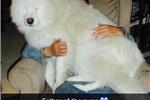 Picture of Puhr's Polar Samoyed (females)