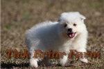 Picture of Miniature Male (Sterling)