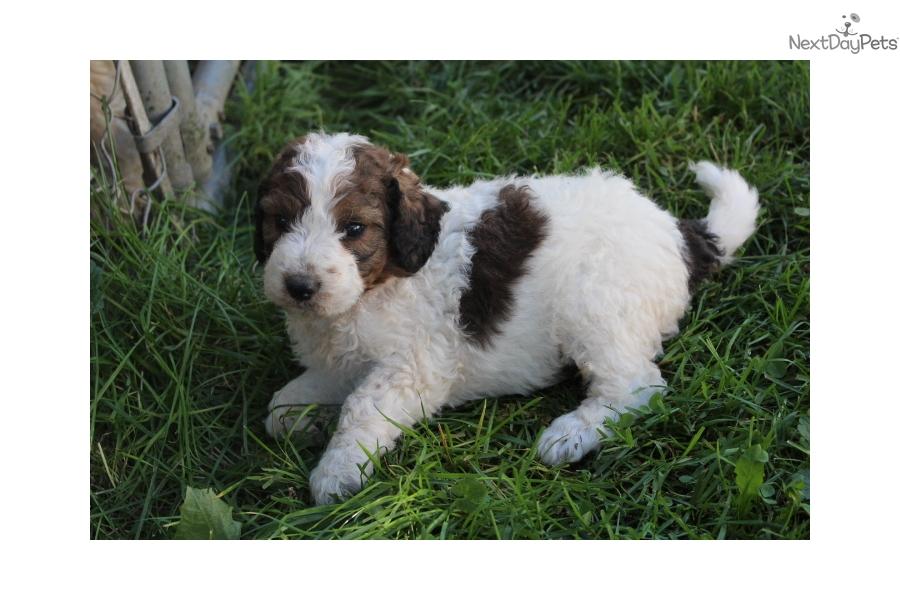 Shedding Dog Breeds Jinks Dogue De Bordeaux Dog Breeds
