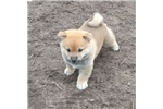 Picture of Jiko is a smart fun and curious little red boy