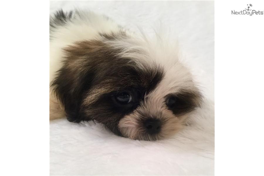 alaskan husky puppies for sale in birmingham alabama