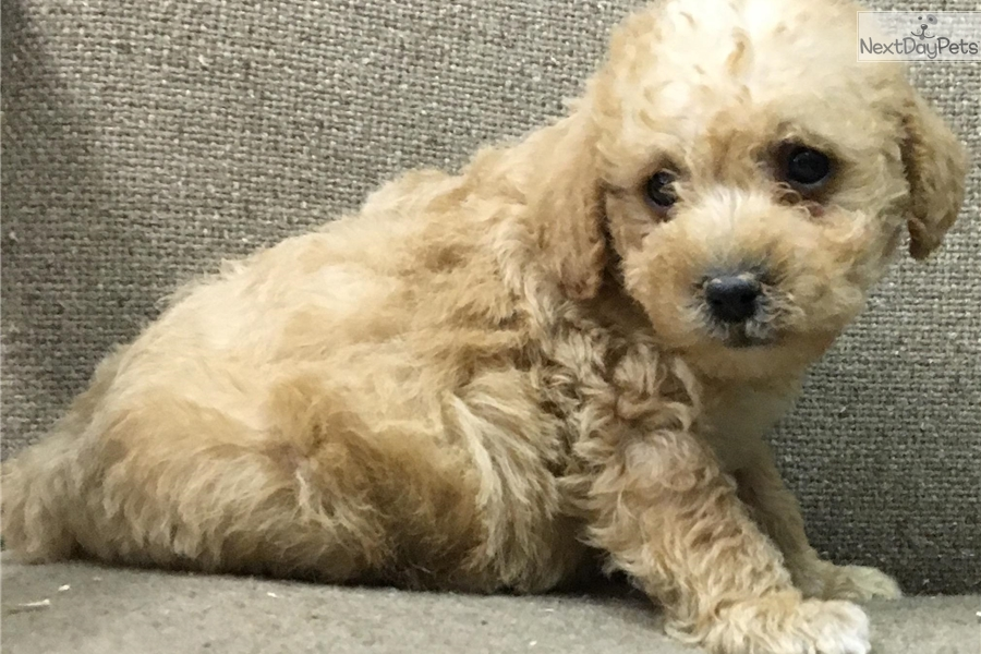 Small Dogs For Sale In Baltimore Md